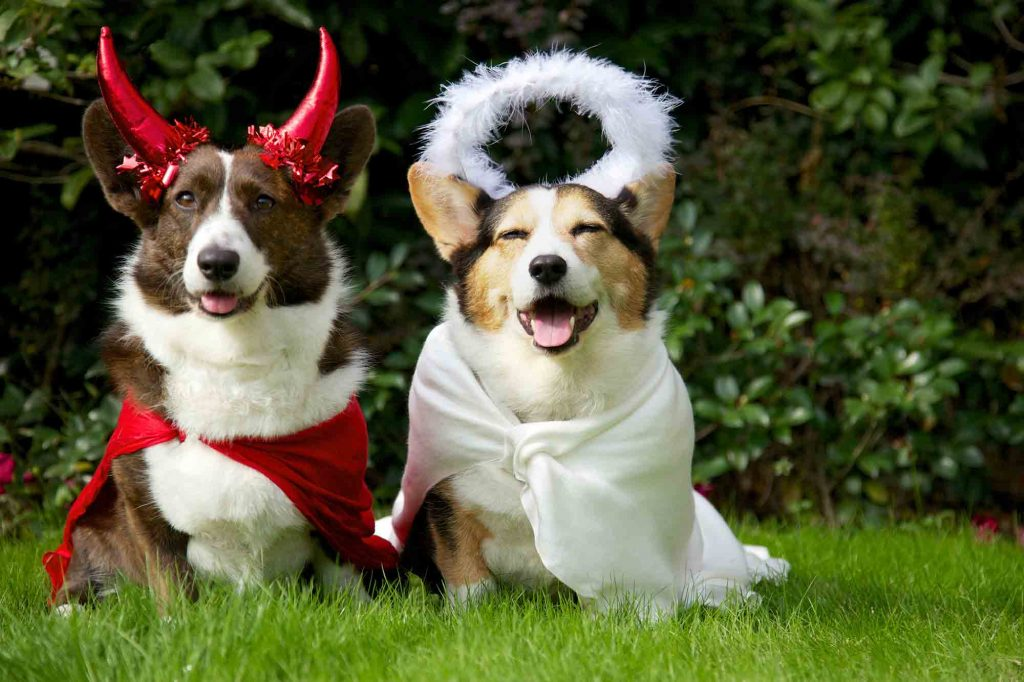 costume ideas for pets