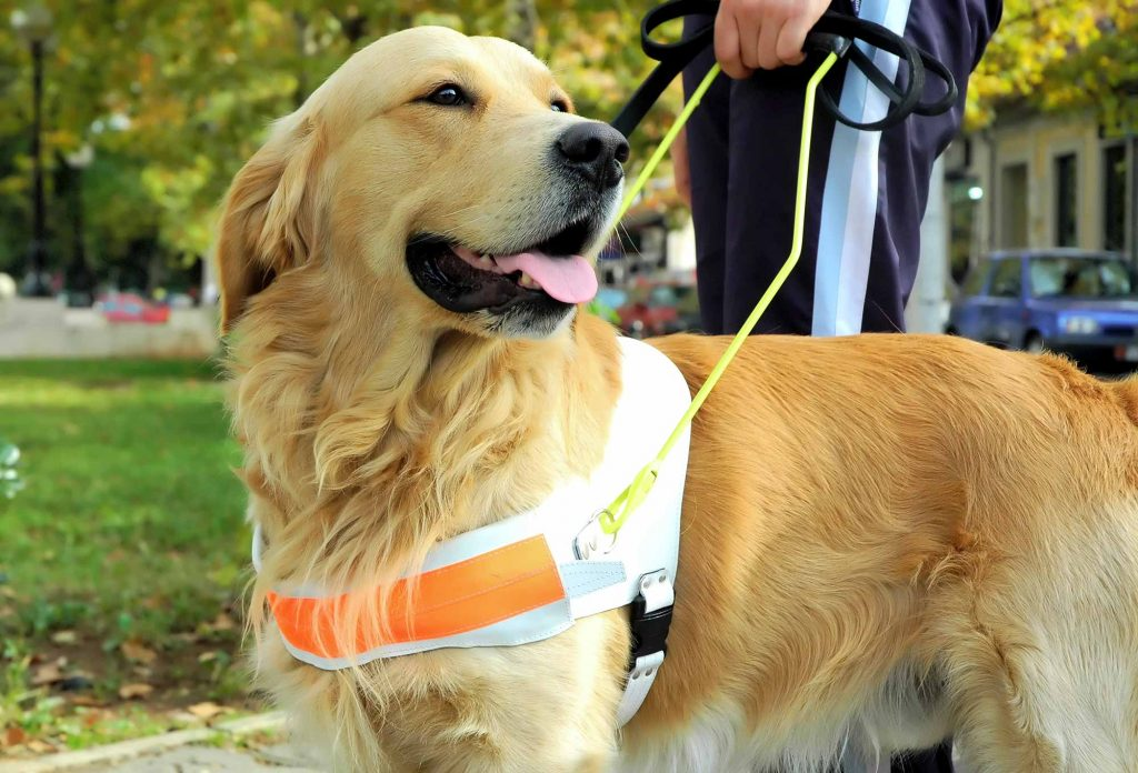 Therapy pets and service animals provide tremendous help to those that need them.