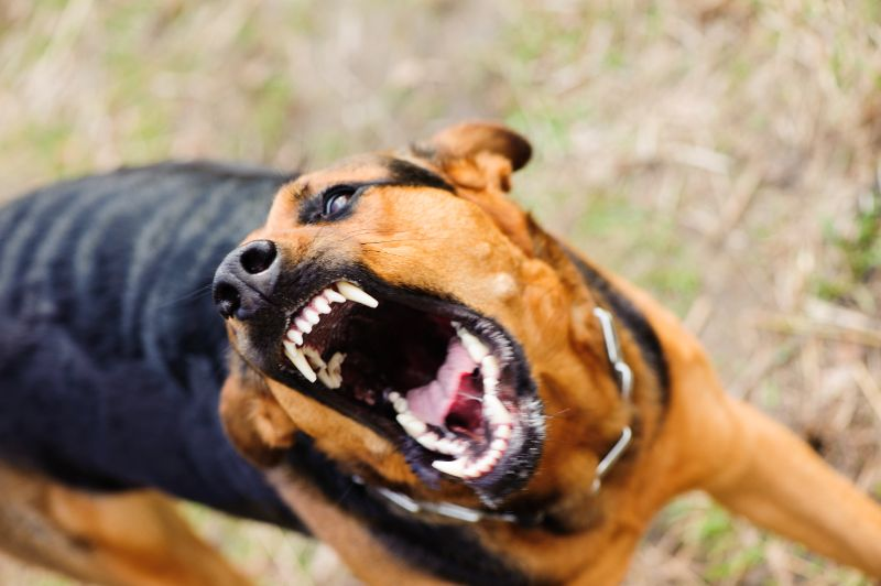 A dog snarls and bares its teeth to the camera