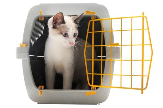 Pet Boarding Austin | BEEVET Animal Hospital