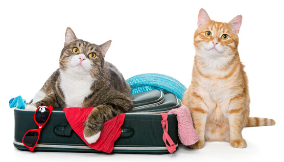 cats ready to travel