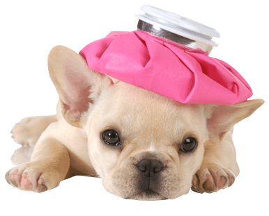 dog with pink water bag