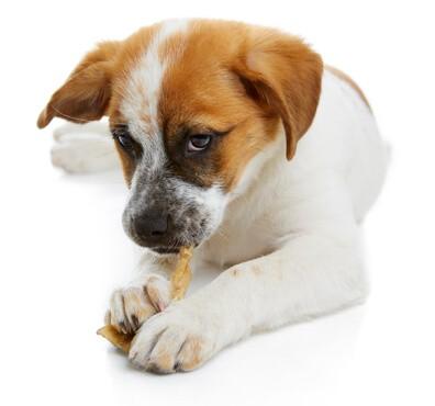 Pet Dentistry Austin | BEEVET Animal Hospital